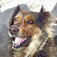 моя собака МУХА :: Александр Анатольевич