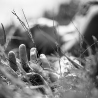 Сливаясь с природой :: Evgeny Kornienko