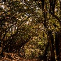 Реликтовый лес :: Maria Zayviy