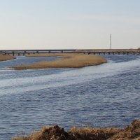 Два моста :: Елена Перевозникова
