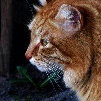 Кошка) :: Полиша Баринова