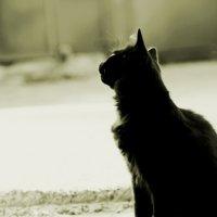 Кот, который гуляет сам по себе :: Дашка Стеценко