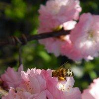 весна поражает своей красотой :: Alice Madman