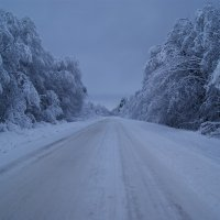 Зимний цвет :: Vinperk Daimon