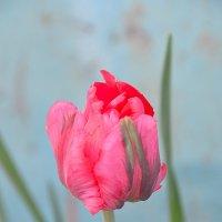 Первые цветы :: Павел Чекалов