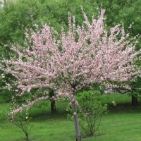 Весна пришла :: Маера Урусова