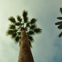 пальма... :: Павел Рубан