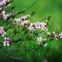 весна :: Tatyana Grebneva