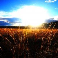 весеннее поле :: Роман Привалов