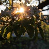 Ярким светом... :: Natusya _ya