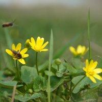 Пчелки 2 :: Елена Ягодина