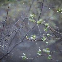 майский снег :: Юлия Вяткина