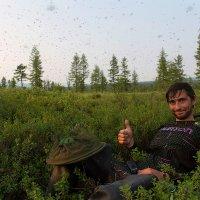 А за ним комарики… :: Денис Будьков