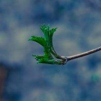 Весна :: Даниил Гаврилюк