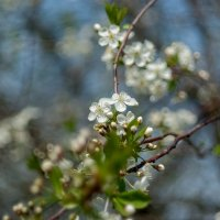 ...весна... :: Андрей Гр
