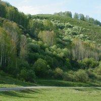 Весна в горах :: Наталья ***