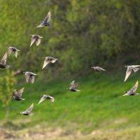 Птички :: Жанна Мальцева