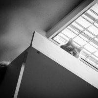 Муся с высоты шкафа) :: Seda Yegiazaryan