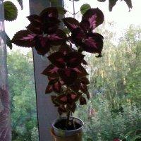 цветы мои :: Надежда Овсяникова