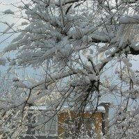 апрельский снег :: Alexandr Ch