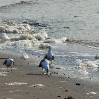 Чайки у моря :: Елена Перевозникова