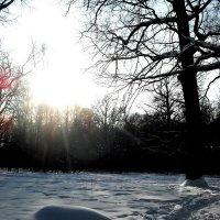 Зимний лес :: текила *