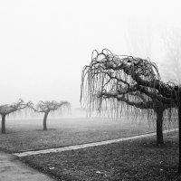 Утро в тумане :: Татьяна Будивская