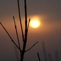 закат... :: татьяна вашурина
