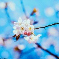 Primavera :: Марта Май