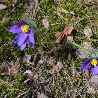 весна в лесу :: Борис Устюжанин