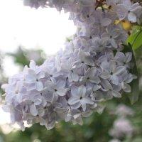 Цветут цветы :: Сергей Кондратович