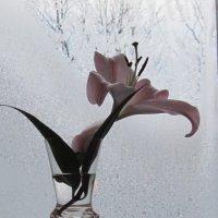 Зима за окном :: Маера Урусова