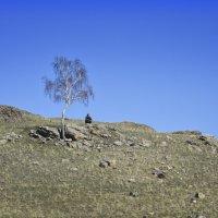 одинокий пастух ... :: Maxxx©