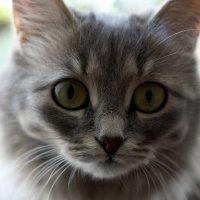 Кошак :: Светлана Бегинина