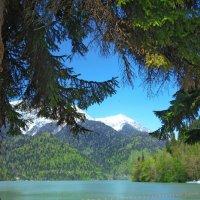 Вид из леса на озеро Рица :: Татьяна Гордеева