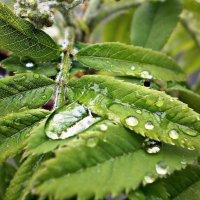 Майский дождь :: Ксения Заболоцкая