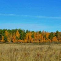 Осеннее поле :: Милешкин Владимир Алексеевич