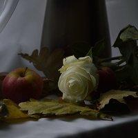 Роза белая :: Валерий Лазарев