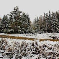 Первый снег :: Анатолий Иргл