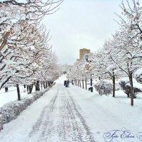 В городе первый снег! :: °•●Елена●•° ♀