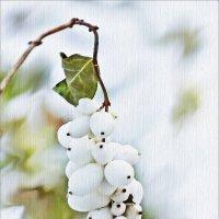 Лишь снежноягодника гроздья белеют искрами вдали... :: Валентина *