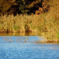 Осенние берега... :: Тамара (st.tamara)