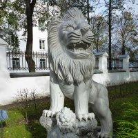 Львы Губернаторского сада  в Ярославле :: Galina Leskova