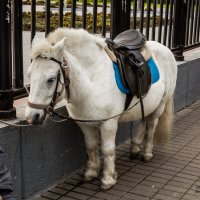 Пони. :: Геннадий Пынькин