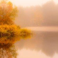 осень в тумане :: Евгений .
