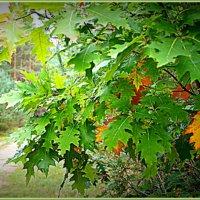 Осень в рамке. :: Лара ***