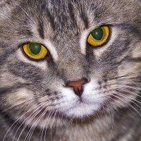 Немного про кота... Желтоглазик... :: Ирина Рассветная