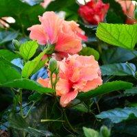 цветочки :: Ефим Хашкес