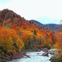 Осень на реках Адыгеи :: Бронислав Богачевский