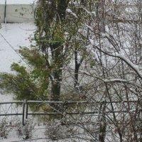 Первый снег. :: Самохвалова Зинаида